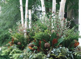 Five Lush Winter Planters