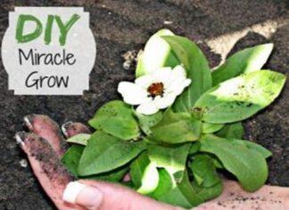 DIY Miracle Grow