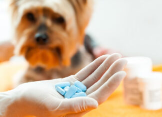 Household Medications for Pets Chart - Acceptable Human Meds