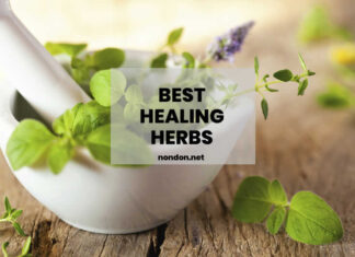 8 Best Healing Herbs Just For You