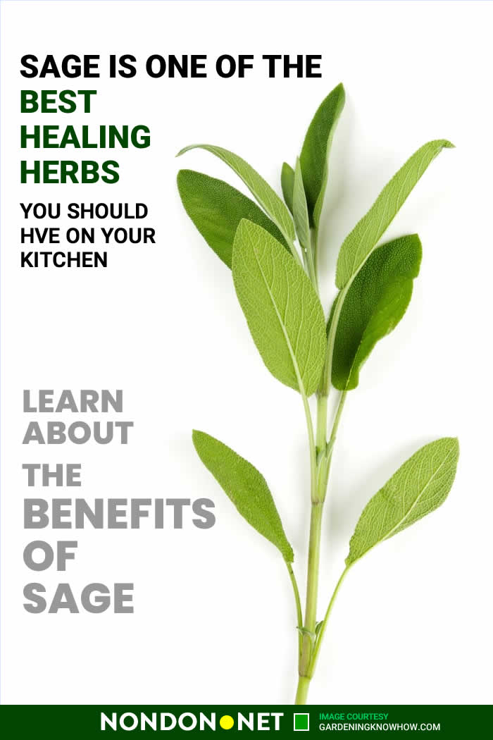 Sage is one of Best Healing Herbs you should have on your Kitchen #BestHealingHerbs #HealingHerbs #BestHerbs #Cinnamon #Basil #Sage #Cloves #CayennePepper #Rosemary #CarawaySeed #Turmeric