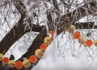 DIY-Apple & Oranges Birdseed Garland