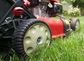 How to Make a Perfect Lawn With No Weeds