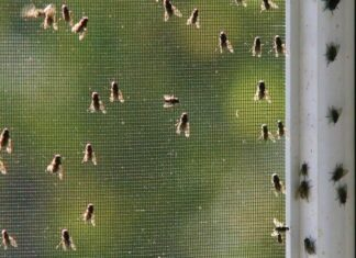 How To Get Rid Of Flies In Your House Naturally