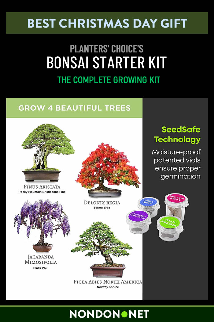 Bonsai Starter Kit - The Complete Growing Kit to Easily Grow 4 Bonsai Trees from Seed- Comprehensive Guide & Bamboo Plant Markers - Unusual Gardening Gifts Ideas for Women - Indoor Bonzai Tree Seeds- Christmas Day Gift #ChristmasDay #ChristmasGift #ChristmasGifts #Bonsai #BonsaiKit #GrowingKit #BambooPlant #Gardening #GardeningIdea #IndoorBonzai
