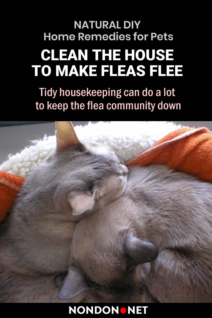 10 Amazing Natural DIY Home Remedies for Pets - Clean the house to make fleas flee #NaturalDIY #DIY #HomeRemediesforPets #HomeRemedies #RemediesforPets #HomeRemedy #Remedies4Pets #Pets #PetsRemedies #NaturalRemedies #DIYHomeRemedies #DIYRemedies #Espomsalt #Cats #Dogs #oatmeal #hydrogenperoxide #yogurt