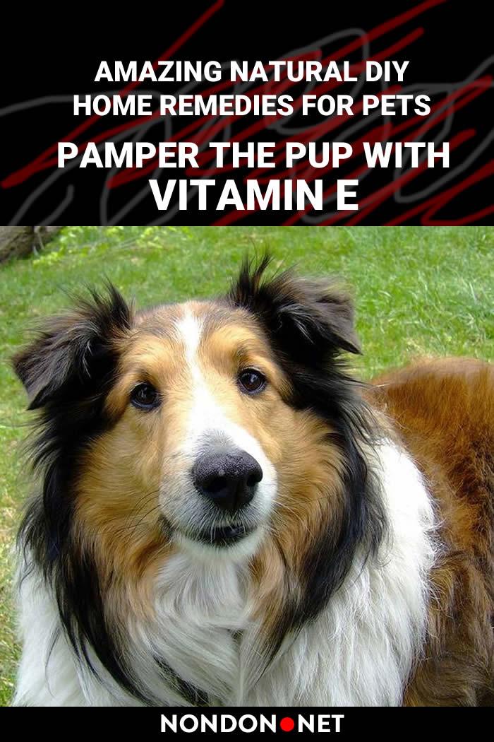 10 Amazing Natural DIY Home Remedies for Pets- Pamper the pup with vitamin E #NaturalDIY #DIY #HomeRemediesforPets #HomeRemedies #RemediesforPets #HomeRemedy #Remedies4Pets #Pets #PetsRemedies #NaturalRemedies #DIYHomeRemedies #DIYRemedies #Espomsalt #Cats #Dogs #oatmeal #hydrogenperoxide #yogurt