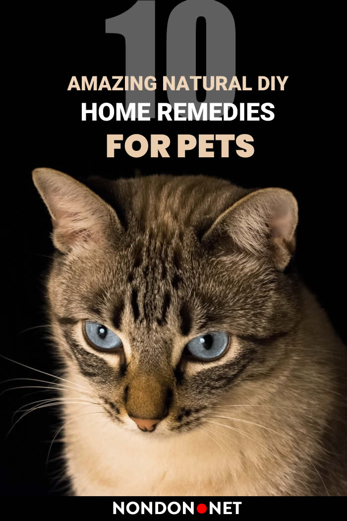 10 Amazing Natural DIY Home Remedies for Pets #NaturalDIY #DIY #HomeRemediesforPets #HomeRemedies #RemediesforPets #HomeRemedy #Remedies4Pets #Pets #PetsRemedies #NaturalRemedies #DIYHomeRemedies #DIYRemedies #Espomsalt #Cats #Dogs #oatmeal #hydrogenperoxide #yogurt