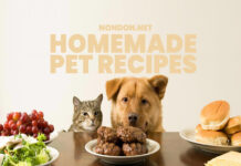 5 Homemade Pet Recipes for your Dogs and Cats- Nondon.net